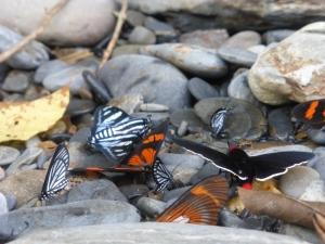 Schmetterlinge in allen Farben