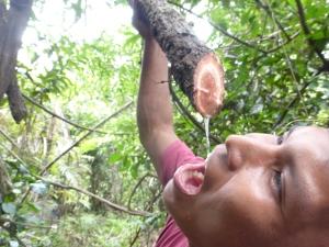 Trinkwasser aus dem Baum