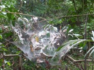 Riesiges Spinnennetz