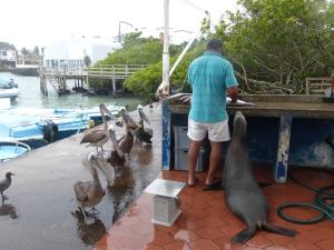 Alle wollen den Fisch