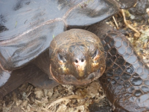 Landschildkröte von ganz nah
