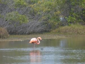 Flamingos in den Lagunen