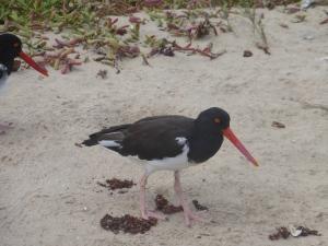 Einer der vielen  Vögel auf den Galápagos