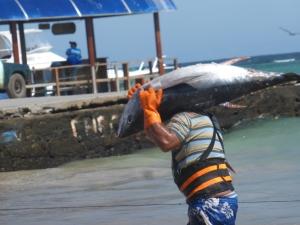 Fischerei auf der Insel Isabela