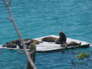 An der Küste San Cristóbals