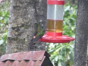 Kolibris im Valle de Corcora