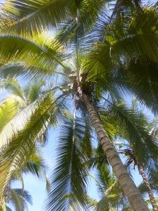 Kolumbische Palmen
