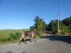 Ein ganz normaler Anblick auf der Isla Ometepe