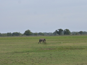 The first sighted Elephant of our trip
