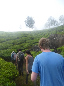 Trekking through teaplantations in Munnar