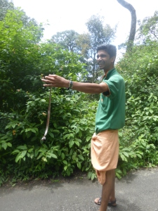He casually told us that this is one of the deadliest Snakes in India. Sweet mate.