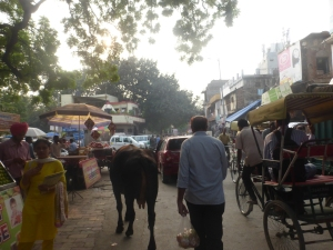 Cows, rubbish and traffic in Dehli
